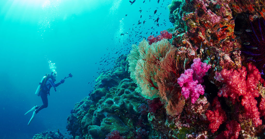scuba diver and reef