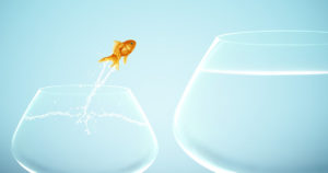 fish jumping from small bowl to large bowl