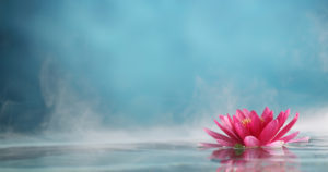 flower floating on steamy water